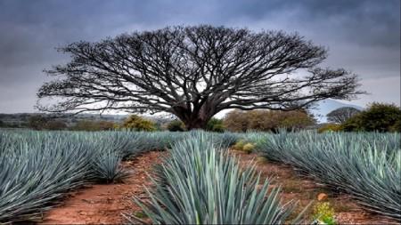 sitio_novela_destilando_amor_tequila
